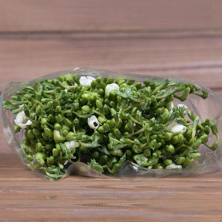 Product Wholesale Freesia White Serenade