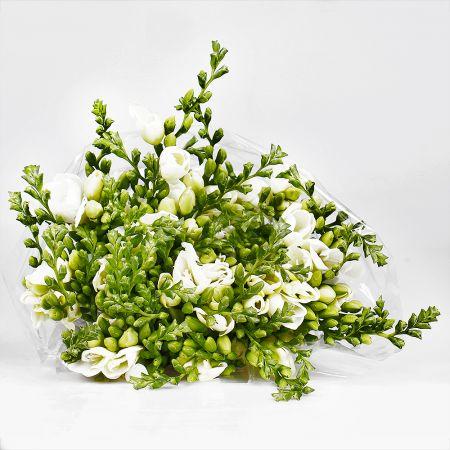 Bouquet Wholesale Fresia white