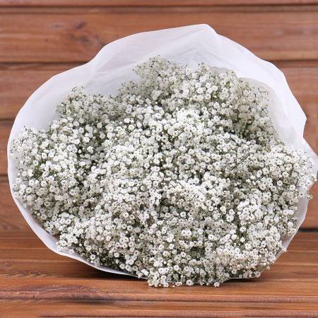 Product Wholesale Gypsophila Million Stars