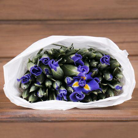 Product Wholesale Iris Blue Magic