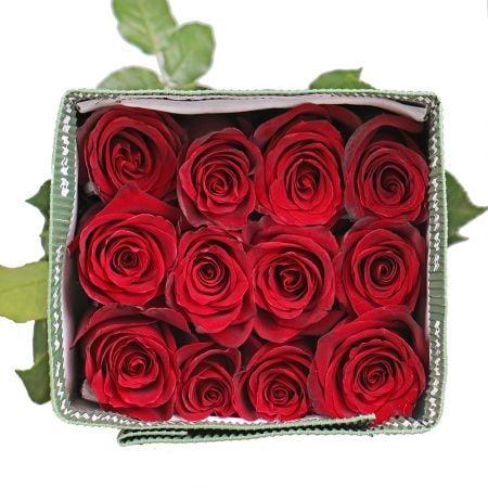 Product Wholesale Rose Explorer (Ecuador)