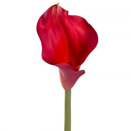 Bouquet Calla red piece