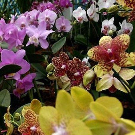 Bouquet Bouquet Orchids