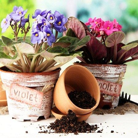 Product Transplanting small plants