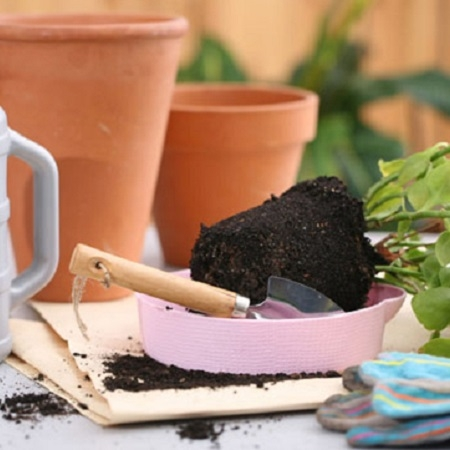 Product Transplanting medium plants