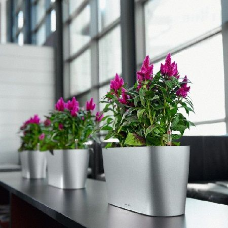 Product Popular plants for the office