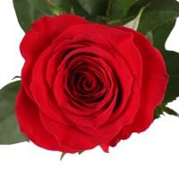 Product Red roses premium by the piece 90 cm