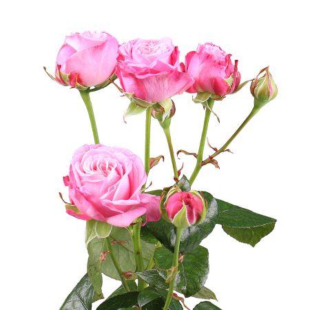 Bouquet Piece bush rose Bombastique