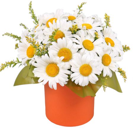 Bouquet Daisies in a hat box