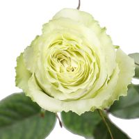 Bouquet Rose Lemonade by piece