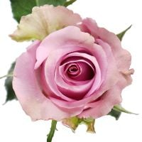 Bouquet Rose Memory Lane by piece