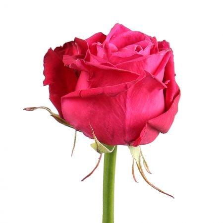 Bouquet Роза Шангри Ла поштучно