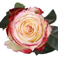 Sweetness premium roses by the piece