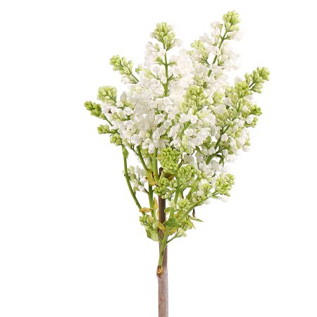 Bouquet Lilac white by piece