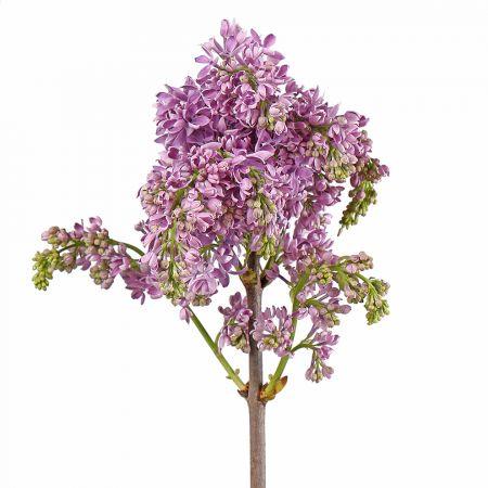 Bouquet Lilac violet by piece