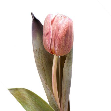 Bouquet Tulips Brownie by piece