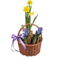 Product Spring basket