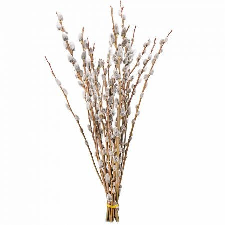 Bouquet Willow branches