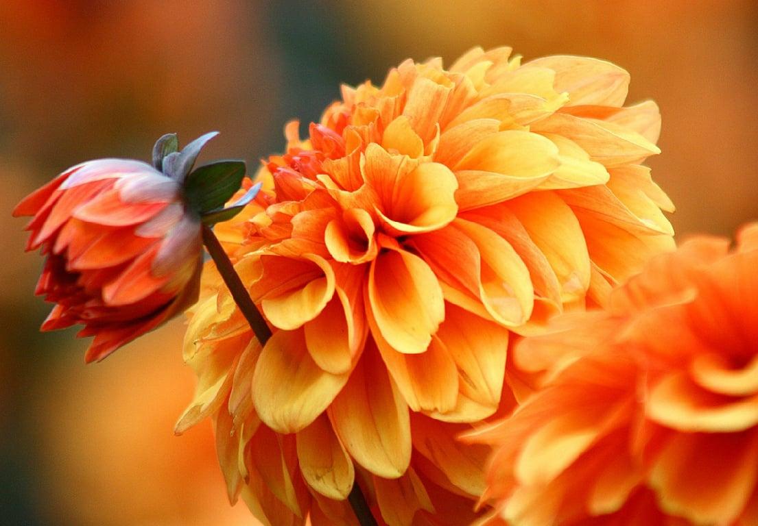 Autumn Garden Plants That Flower In October