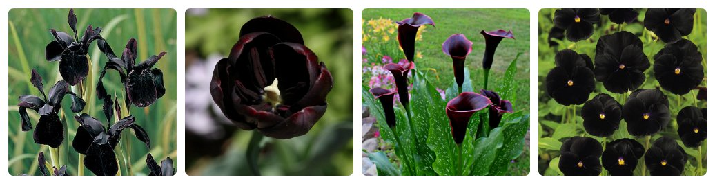 Black Flowers: True or False?