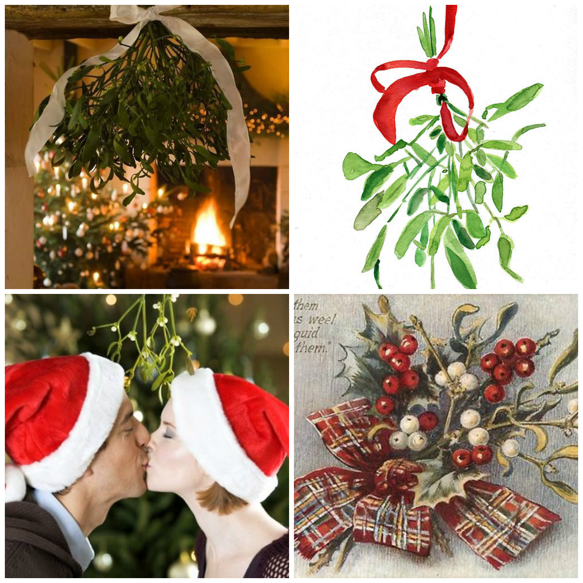 Mistletoe The Symbolism Of Plant And Christmas Traditions