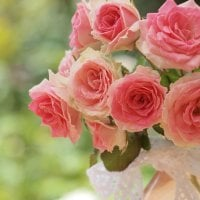 Caring For the Potted Rose: Tips