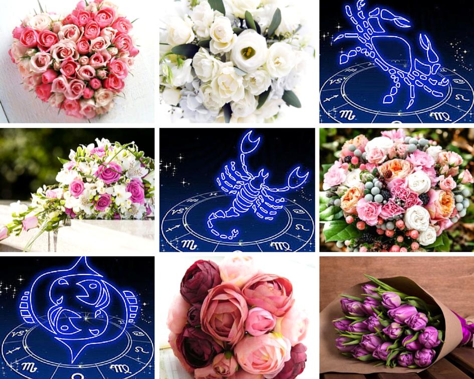 цветок под знаком рак