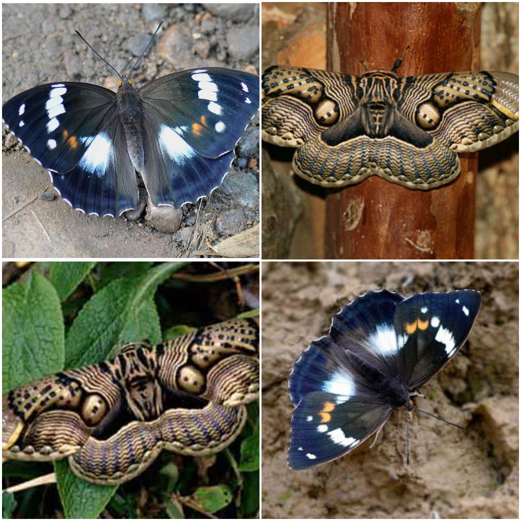 Самые редкие бабочки в мире
