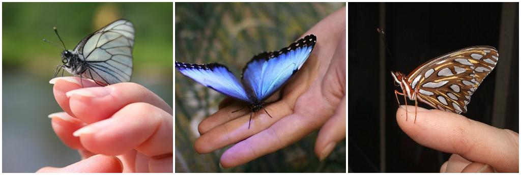 Бабочки разведение в домашних условиях 972