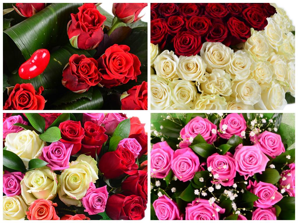 Фото и названия вьющихся цветов для дачи фото с названиями