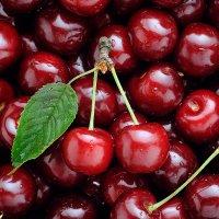 Sweet summer cherry