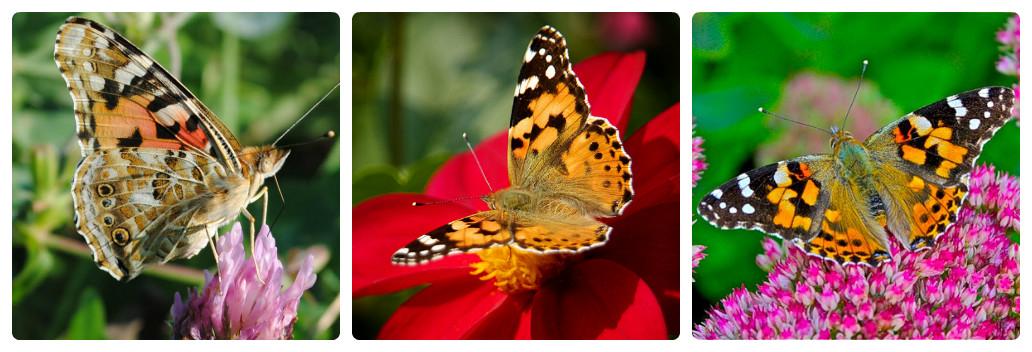 Топ-10 самых красивых бабочек мира