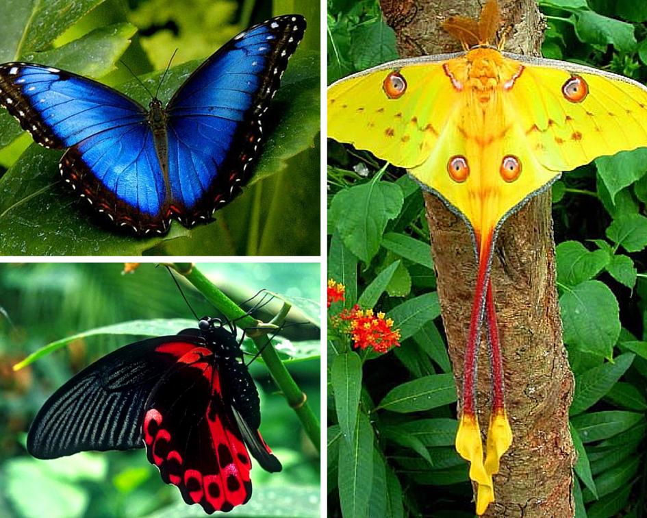 Бабочки фото описание и названия