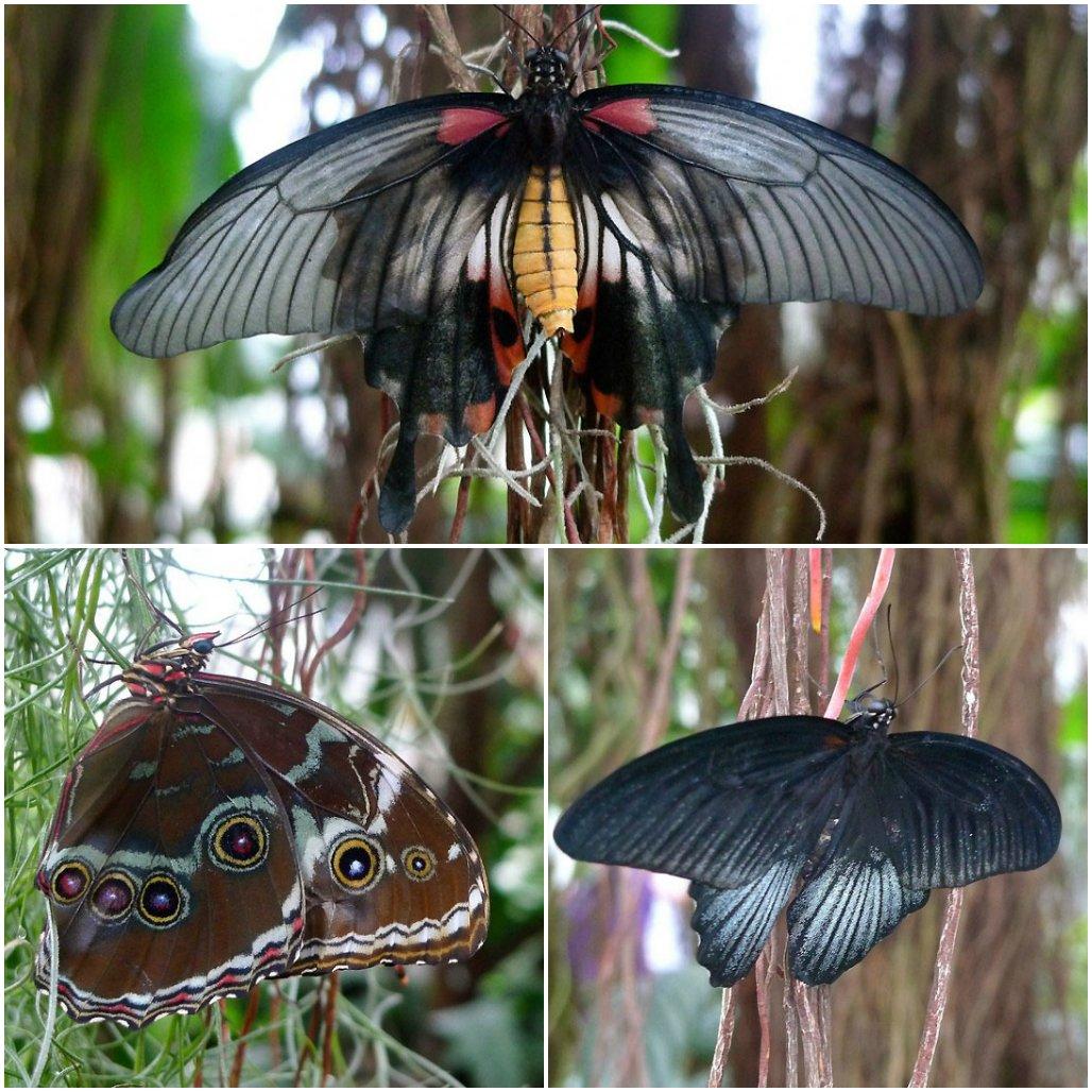 Выставка бабочек в оранжерее Уизли в Великобритании